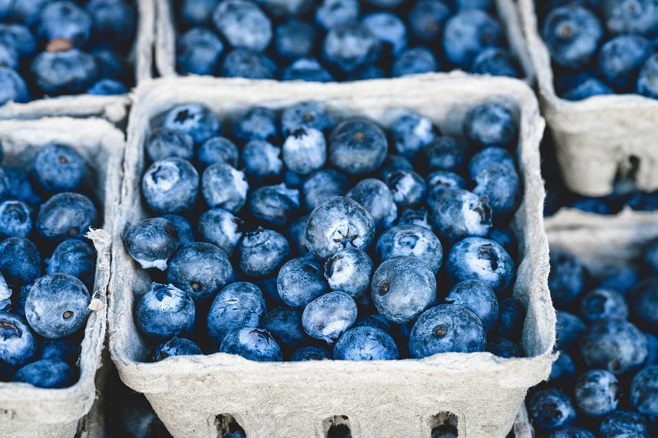 frozen blueberry buckets